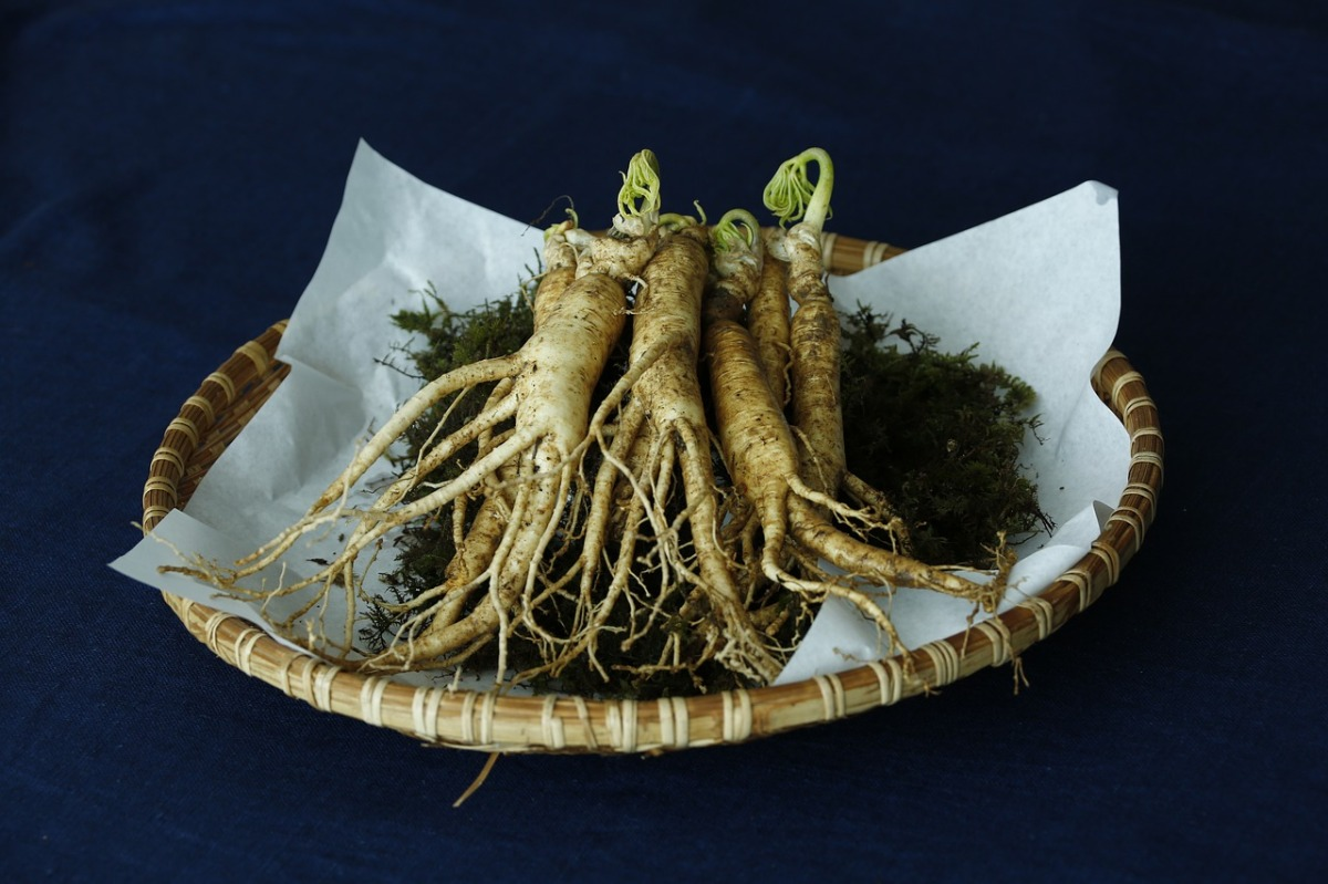 Korean ginseng from Tasmania